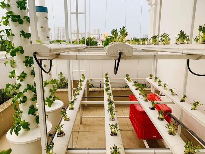 MC Đại Nghĩa thư giãn tinh thần bằng cách trồng rau và nấm sạch trên sân thượng nhà mình ở quận 7, TP HCM - Ảnh 2.