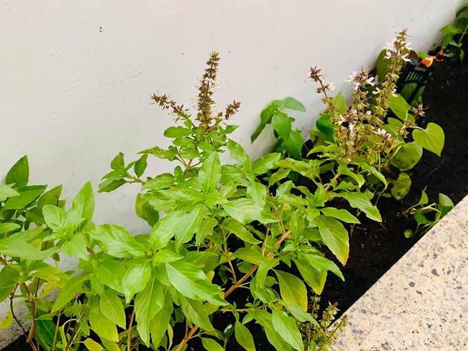 MC Đại Nghĩa thư giãn tinh thần bằng cách trồng rau và nấm sạch trên sân thượng nhà mình ở quận 7, TP HCM - Ảnh 6.