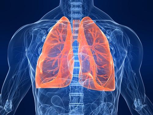 Phổi của chúng ta rất cần được chăm sóc bằng những thực phẩm này: Bạn hãy ăn nhiều để phổi được làm sạch, giữ ẩm và nuôi dưỡng tốt nhất - Ảnh 1.