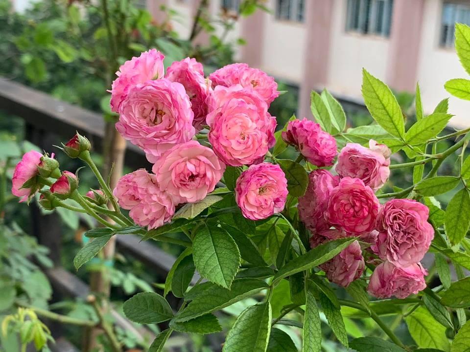 Không cần tinh dầu hay xịt phòng, ngôi nhà của chị em sẽ thơm mát hơn nhờ trong những loại cây này! - Ảnh 9.