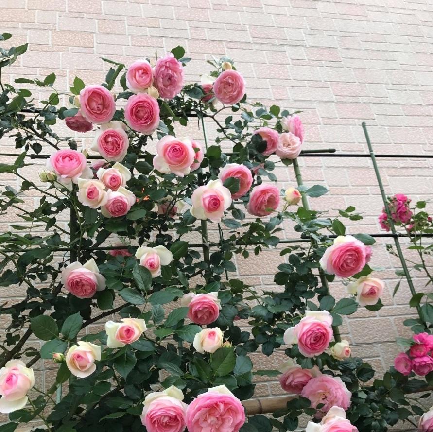 Không cần tinh dầu hay xịt phòng, ngôi nhà của chị em sẽ thơm mát hơn nhờ trong những loại cây này! - Ảnh 8.