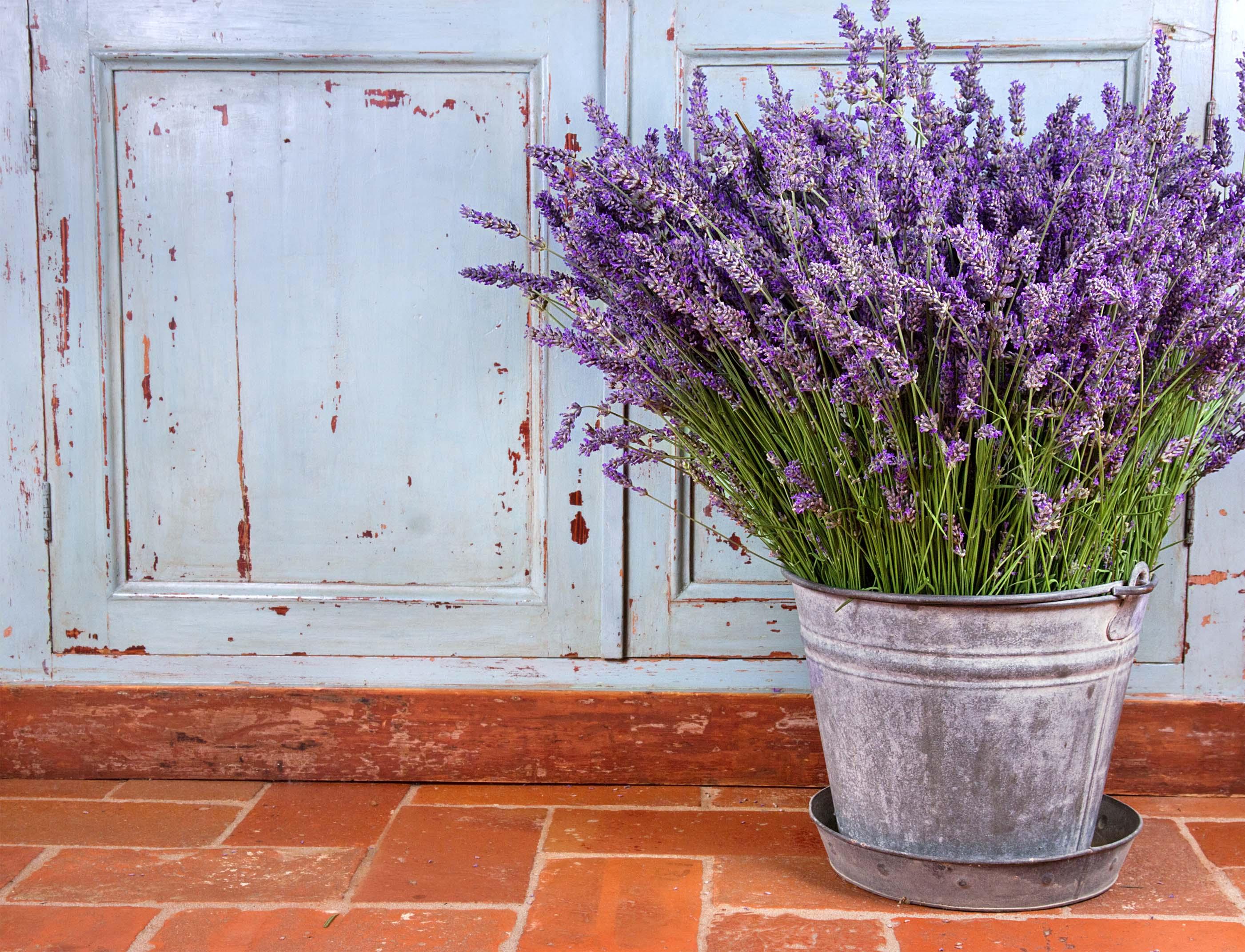 Không cần tinh dầu hay xịt phòng, ngôi nhà của chị em sẽ thơm mát hơn nhờ trong những loại cây này! - Ảnh 3.