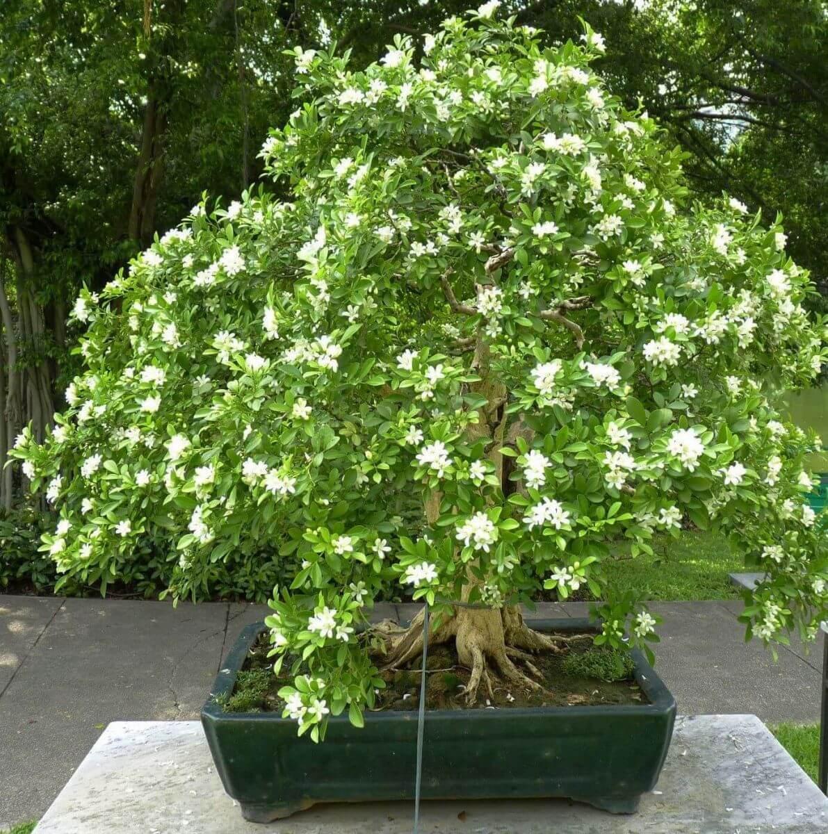 Không cần tinh dầu hay xịt phòng, ngôi nhà của chị em sẽ thơm mát hơn nhờ trong những loại cây này! - Ảnh 14.
