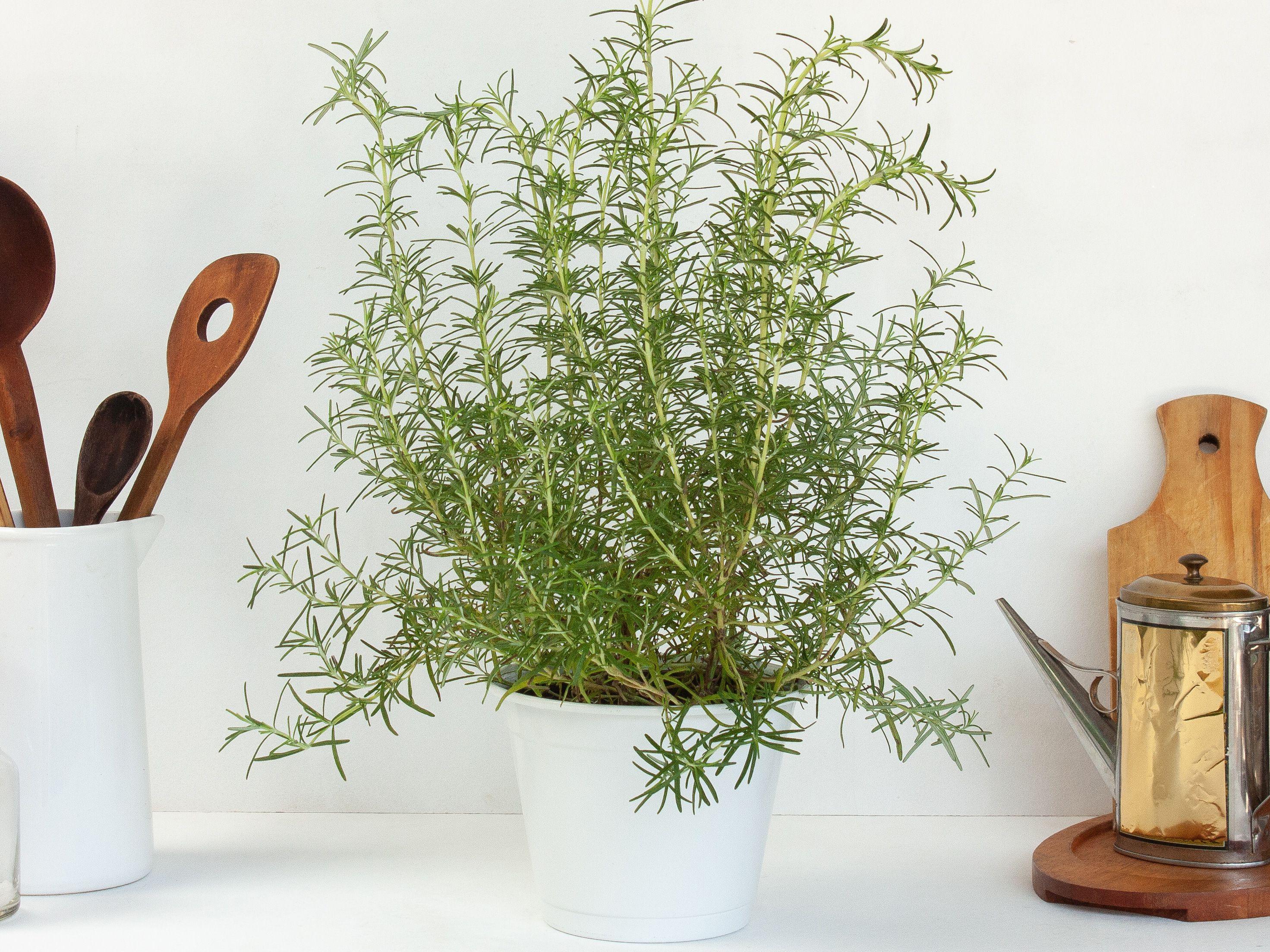 Không cần tinh dầu hay xịt phòng, ngôi nhà của chị em sẽ thơm mát hơn nhờ trong những loại cây này! - Ảnh 12.