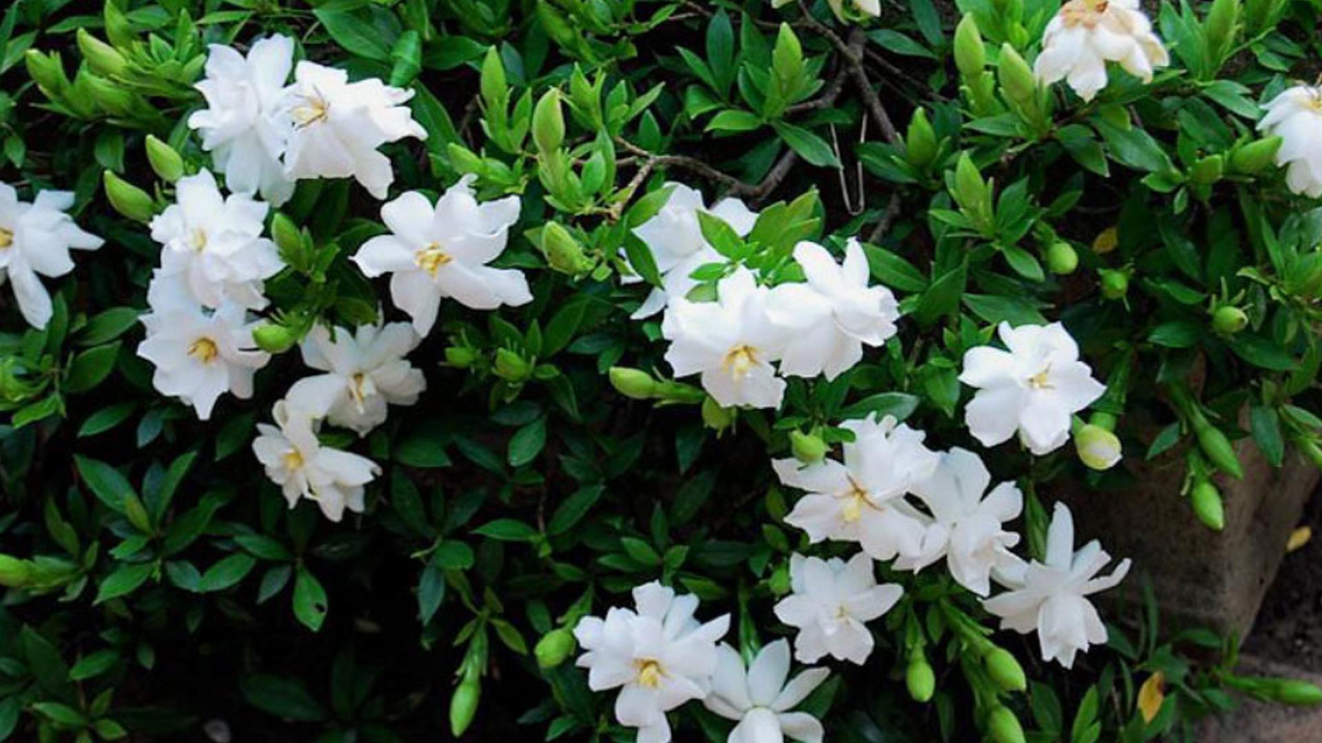 Không cần tinh dầu hay xịt phòng, ngôi nhà của chị em sẽ thơm mát hơn nhờ trong những loại cây này! - Ảnh 6.