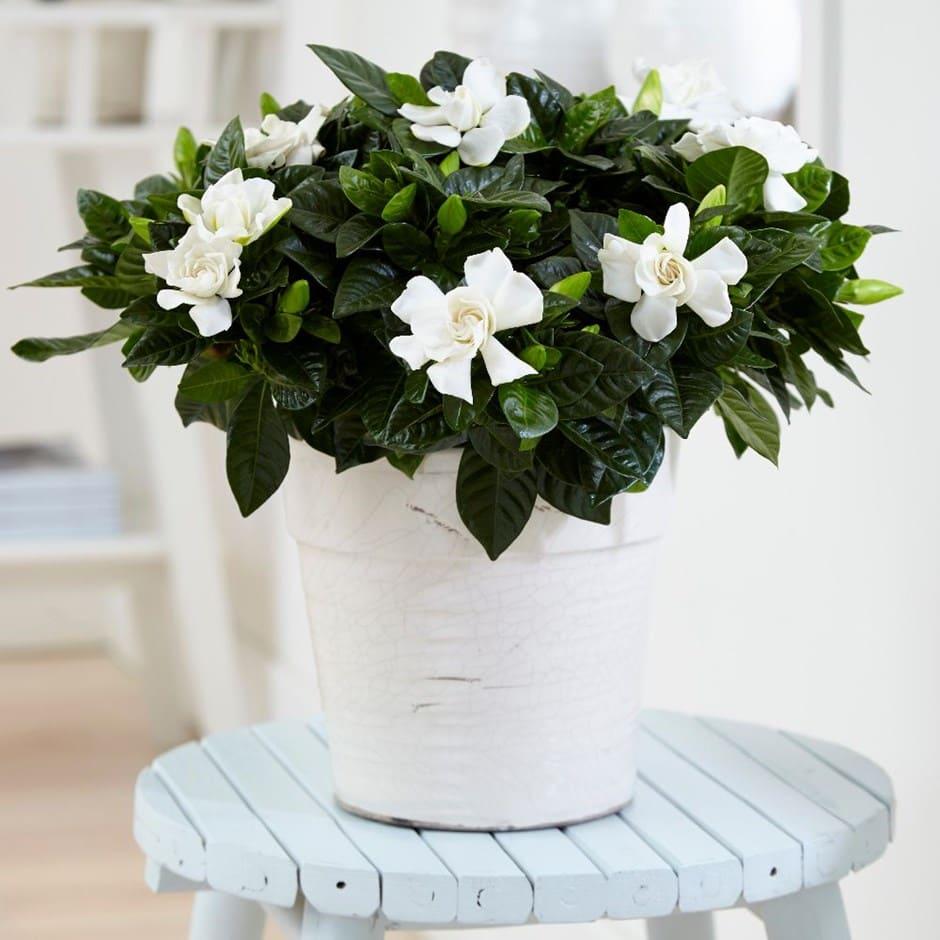 Không cần tinh dầu hay xịt phòng, ngôi nhà của chị em sẽ thơm mát hơn nhờ trong những loại cây này! - Ảnh 7.