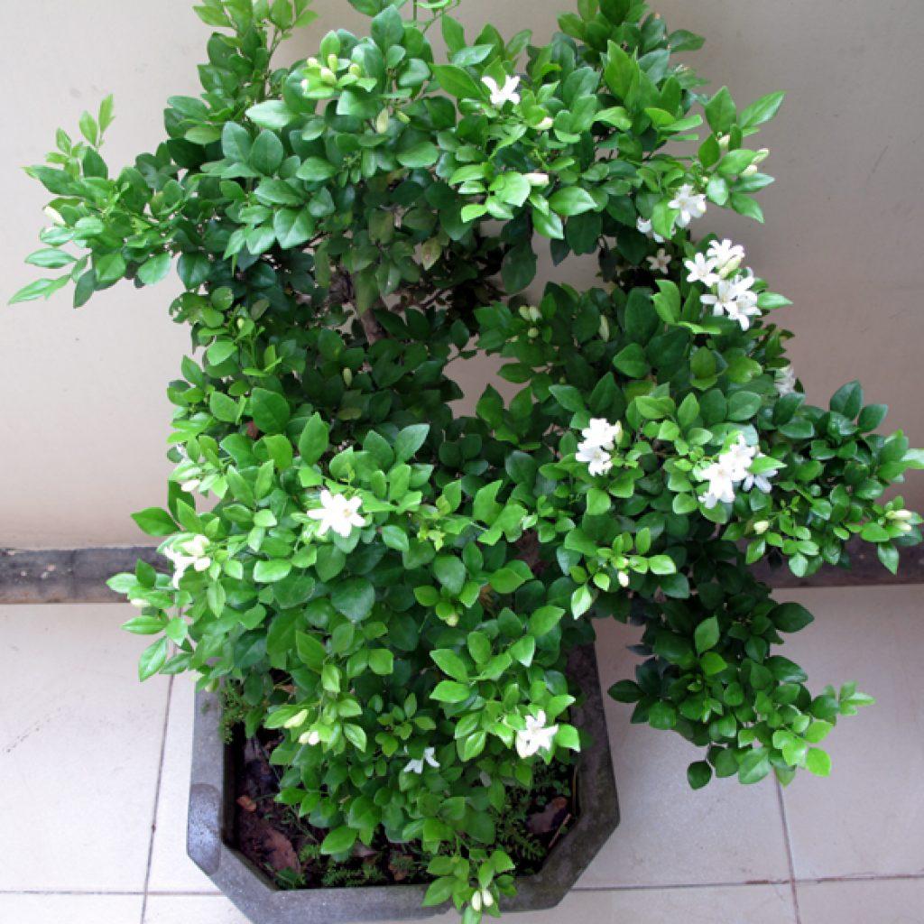 Không cần tinh dầu hay xịt phòng, ngôi nhà của chị em sẽ thơm mát hơn nhờ trong những loại cây này! - Ảnh 15.