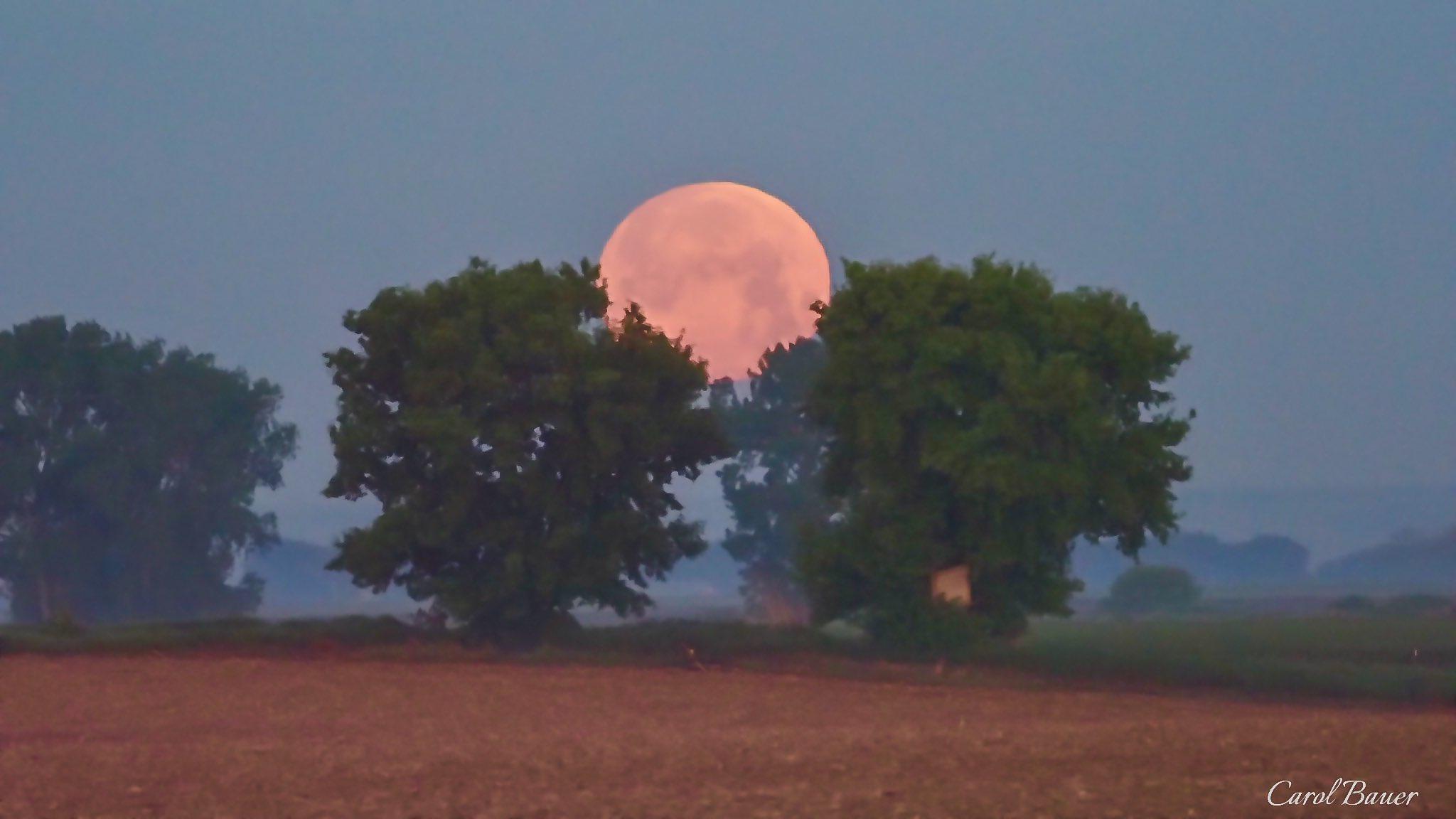 Ngất ngây với một loạt khoảnh khắc về hiện tượng mặt trăng dâu tây hiếm có diễn ra vào đêm qua, rạng sáng nay - Ảnh 13.