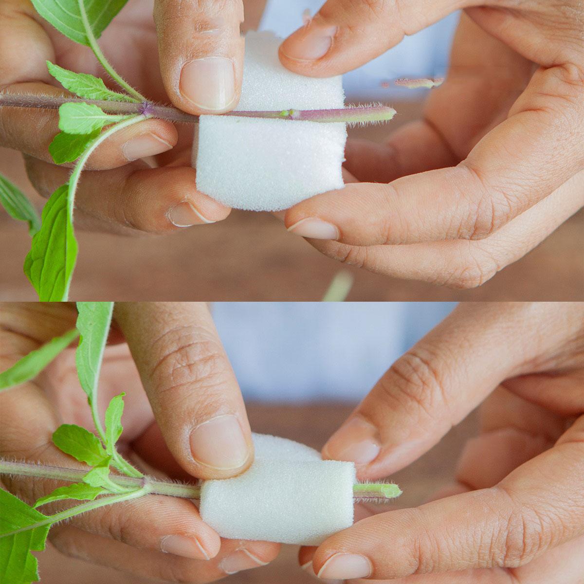 Cắt rau bỏ trong chai nhựa, cách làm đơn giản nhưng thu hoạch rau nhiều bất ngờ - Ảnh 11.