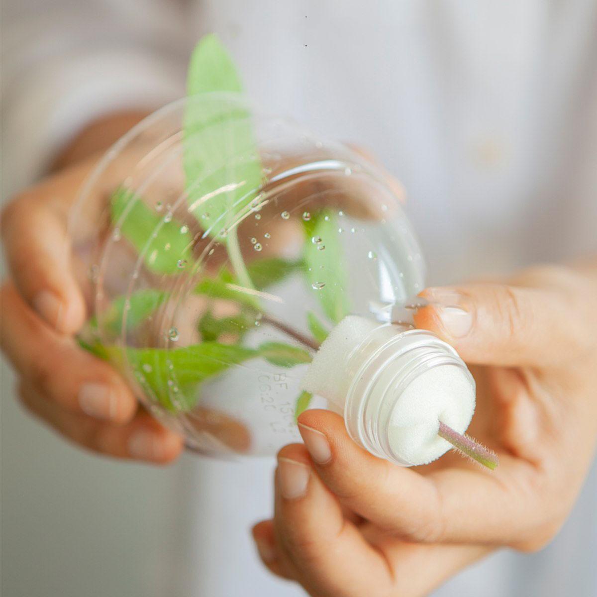 Cắt rau bỏ trong chai nhựa, cách làm đơn giản nhưng thu hoạch rau nhiều bất ngờ - Ảnh 12.