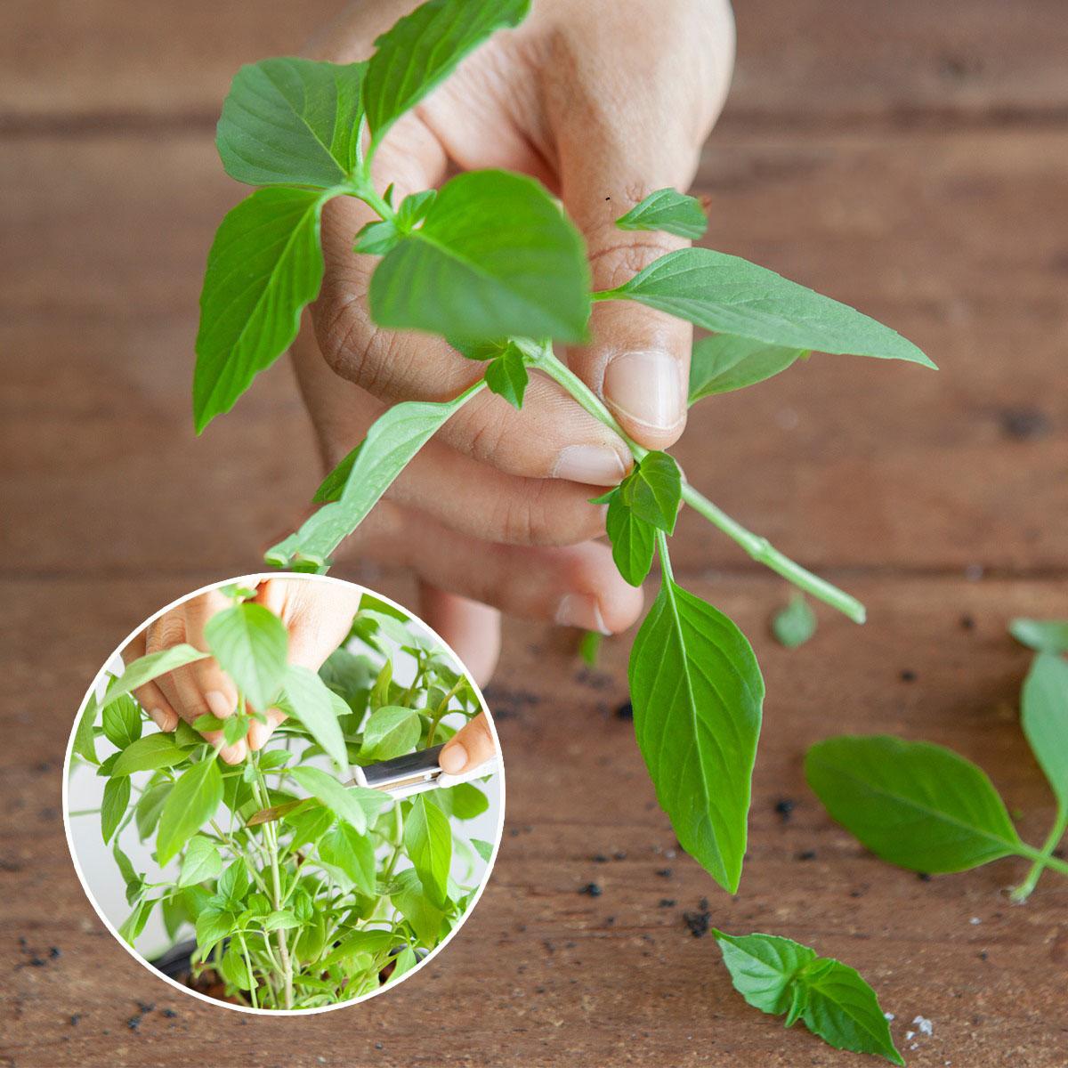 Cắt rau bỏ trong chai nhựa, cách làm đơn giản nhưng thu hoạch rau nhiều bất ngờ - Ảnh 6.