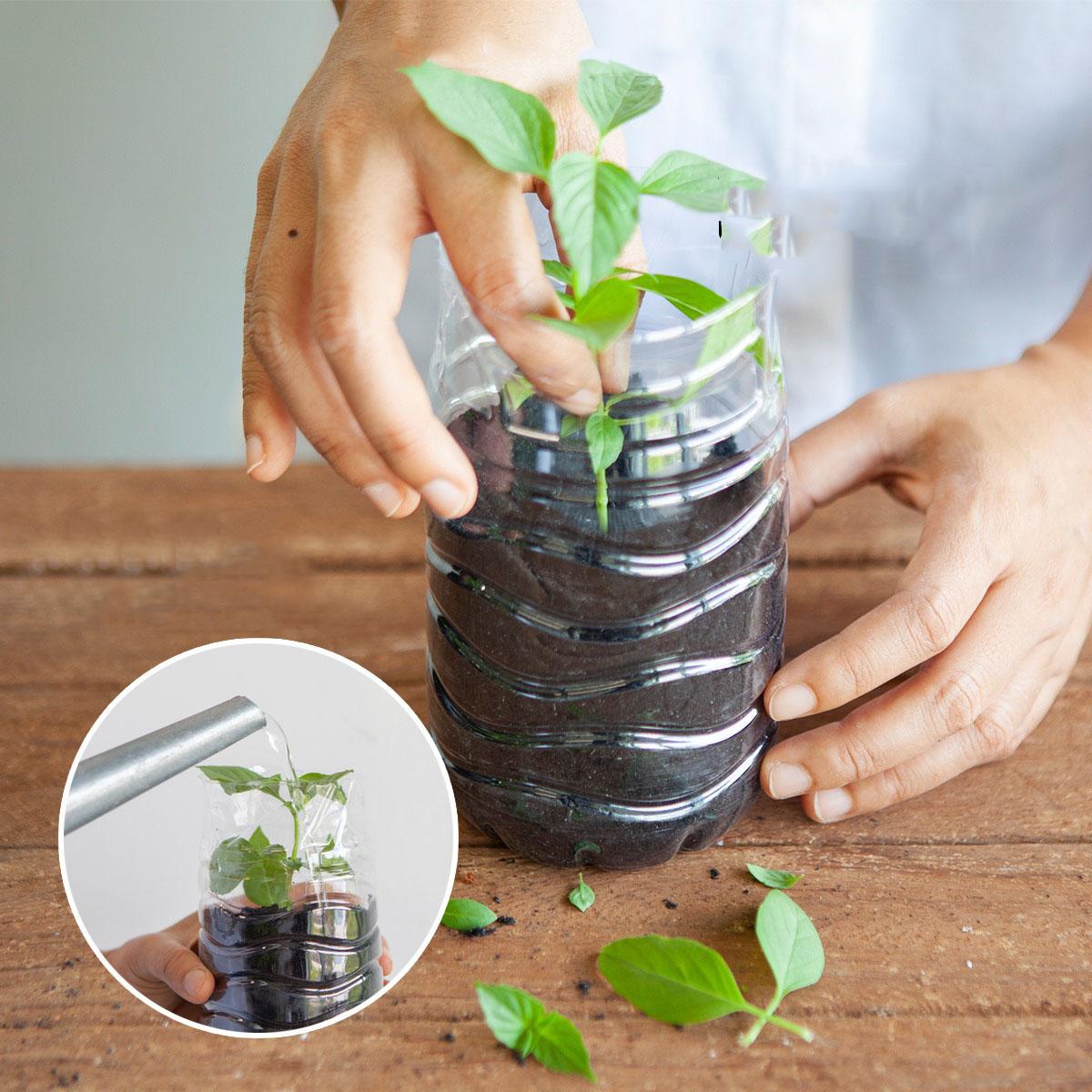 Cắt rau bỏ trong chai nhựa, cách làm đơn giản nhưng thu hoạch rau nhiều bất ngờ - Ảnh 7.