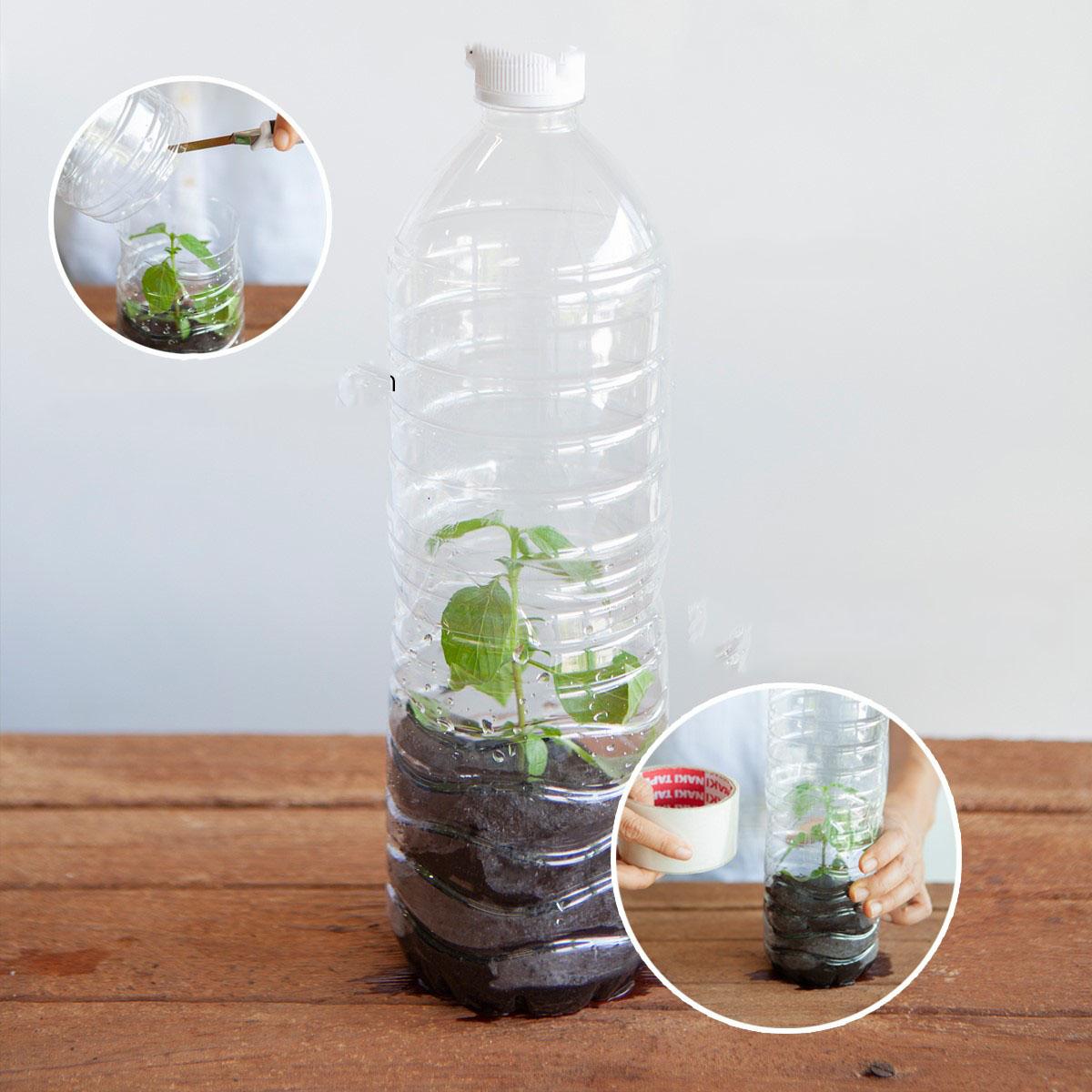 Cắt rau bỏ trong chai nhựa, cách làm đơn giản nhưng thu hoạch rau nhiều bất ngờ - Ảnh 8.