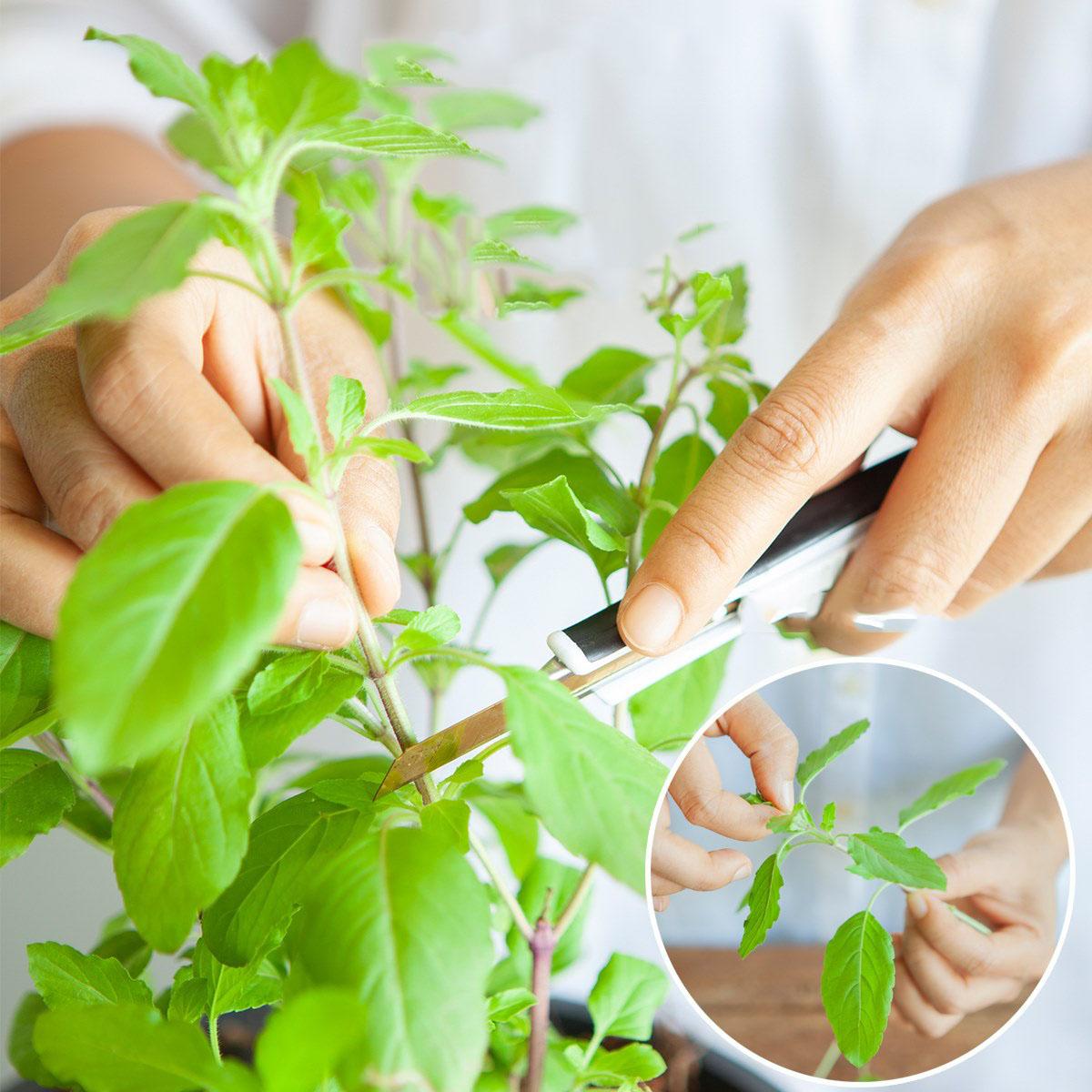 Cắt rau bỏ trong chai nhựa, cách làm đơn giản nhưng thu hoạch rau nhiều bất ngờ - Ảnh 10.