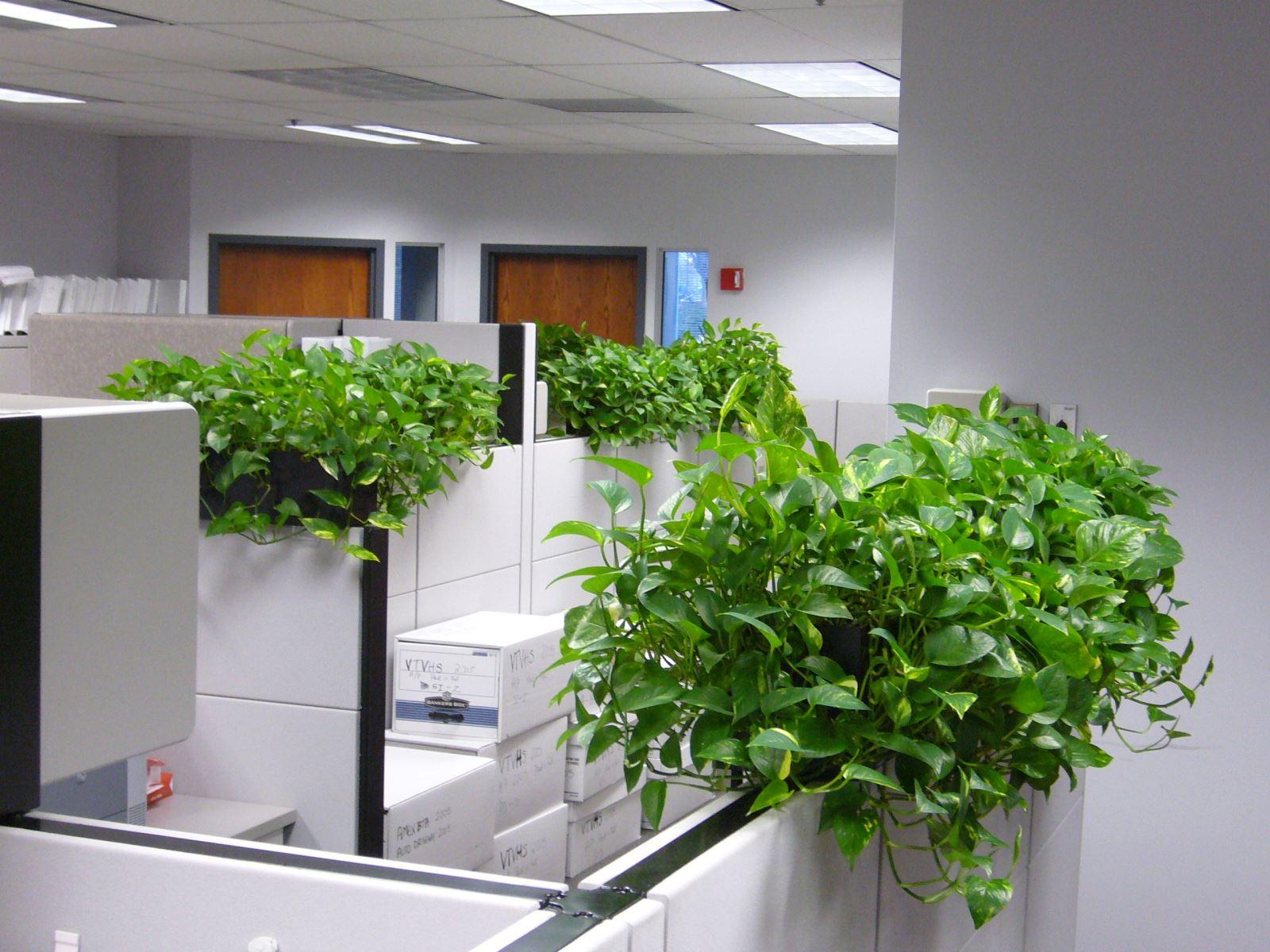 Hè nóng bức, chị em nên trồng những loại cây này để làm mát không gian ngôi nhà - Ảnh 6.