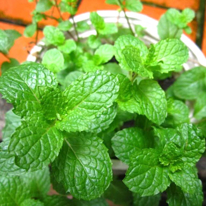 Cắt rau gia vị bỏ trong chai nhựa, cách làm đơn giản, dễ trồng nhưng thu hoạch rau nhiều bất ngờ - Ảnh 3.