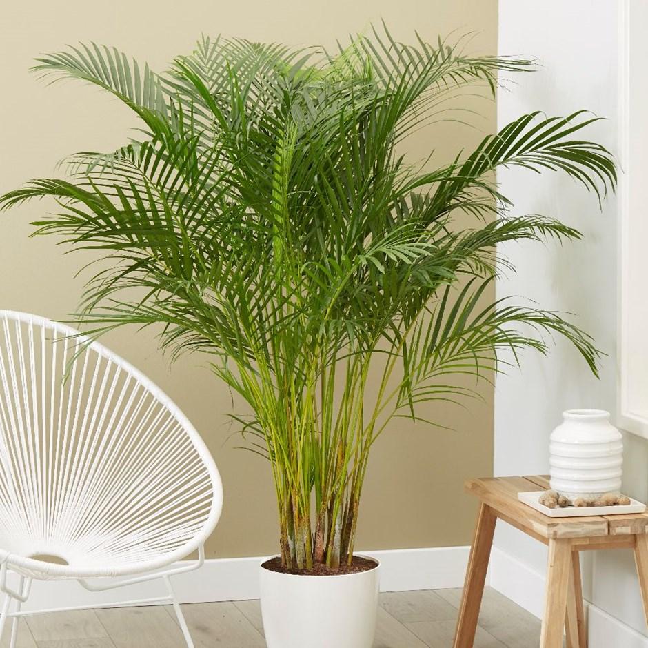 Hè nóng bức, chị em nên trồng những loại cây này để làm mát không gian ngôi nhà - Ảnh 5.