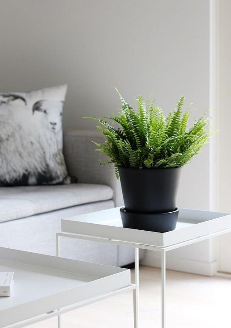 Hè nóng bức, chị em nên trồng những loại cây này để làm mát không gian ngôi nhà - Ảnh 3.