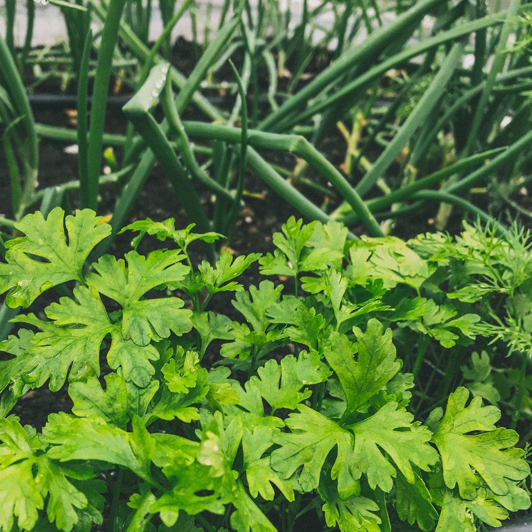 Người phụ nữ quyết không bỏ phí tuổi thanh xuân bằng cách tạo khu vườn quanh năm xanh mát - Ảnh 17.