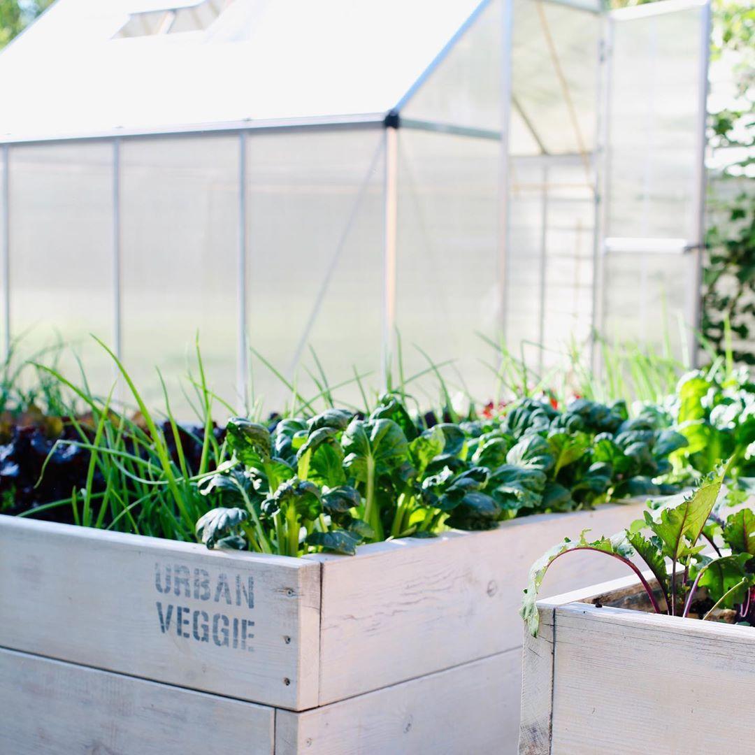 Người phụ nữ quyết không bỏ phí tuổi thanh xuân bằng cách tạo khu vườn quanh năm xanh mát - Ảnh 10.