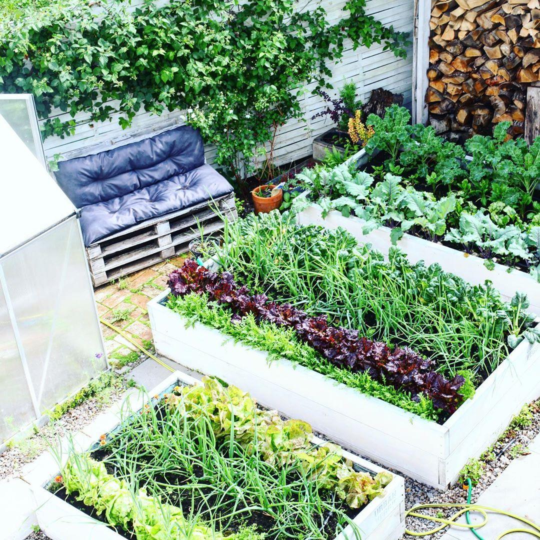 Người phụ nữ quyết không bỏ phí tuổi thanh xuân bằng cách tạo khu vườn quanh năm xanh mát - Ảnh 4.