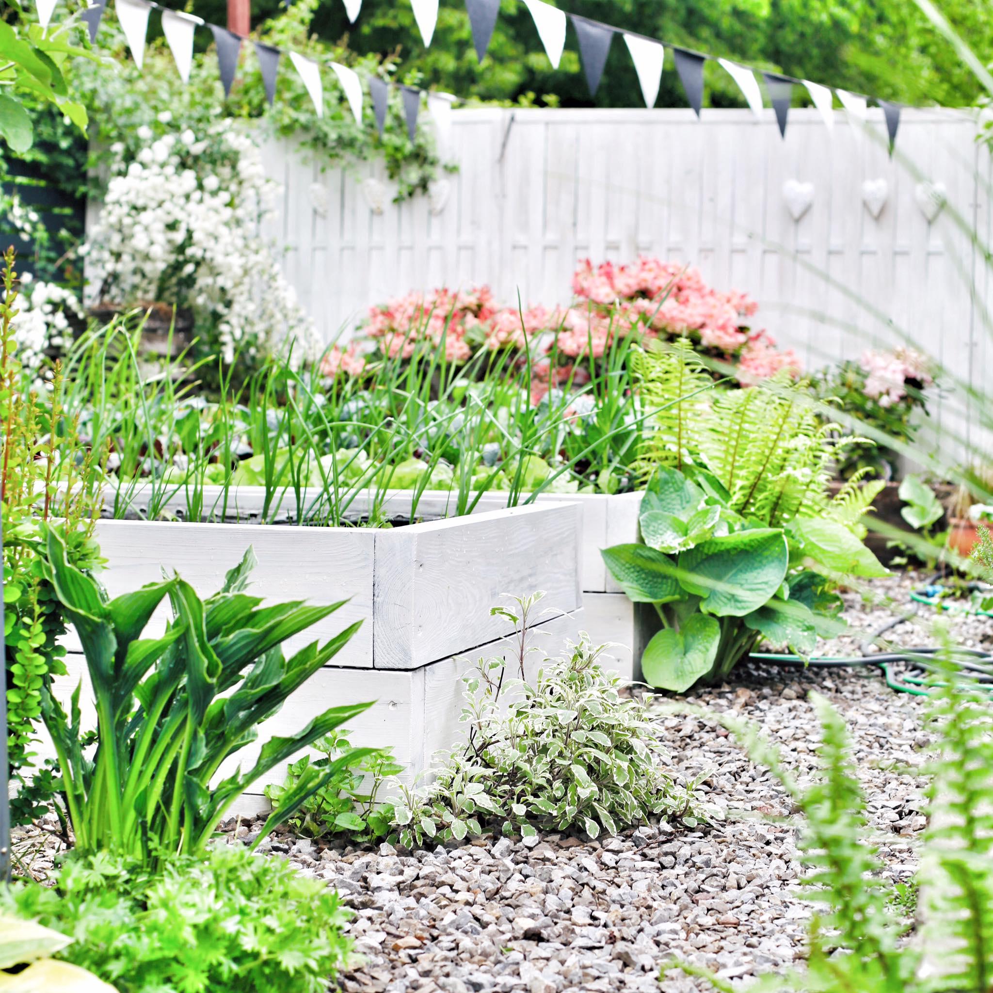 Người phụ nữ quyết không bỏ phí tuổi thanh xuân bằng cách tạo khu vườn quanh năm xanh mát - Ảnh 7.