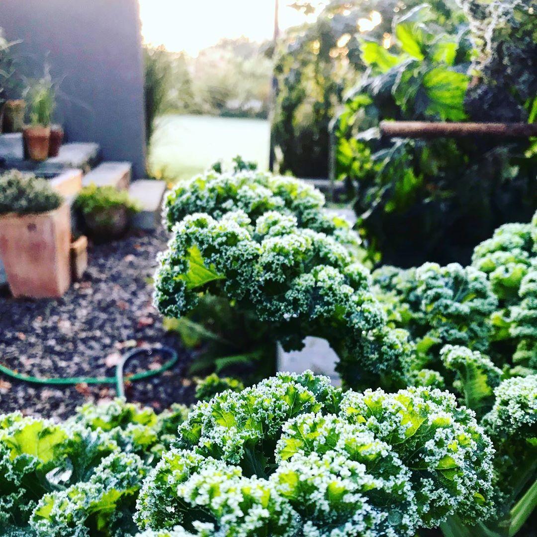 Người phụ nữ quyết không bỏ phí tuổi thanh xuân bằng cách tạo khu vườn quanh năm xanh mát - Ảnh 21.