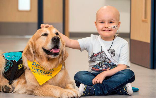 Liệu pháp thú cưng - Trị liệu bằng động vật: Phương pháp trị liệu, giải tỏa tâm lý tuyệt vời cho các em bé bị bệnh nặng