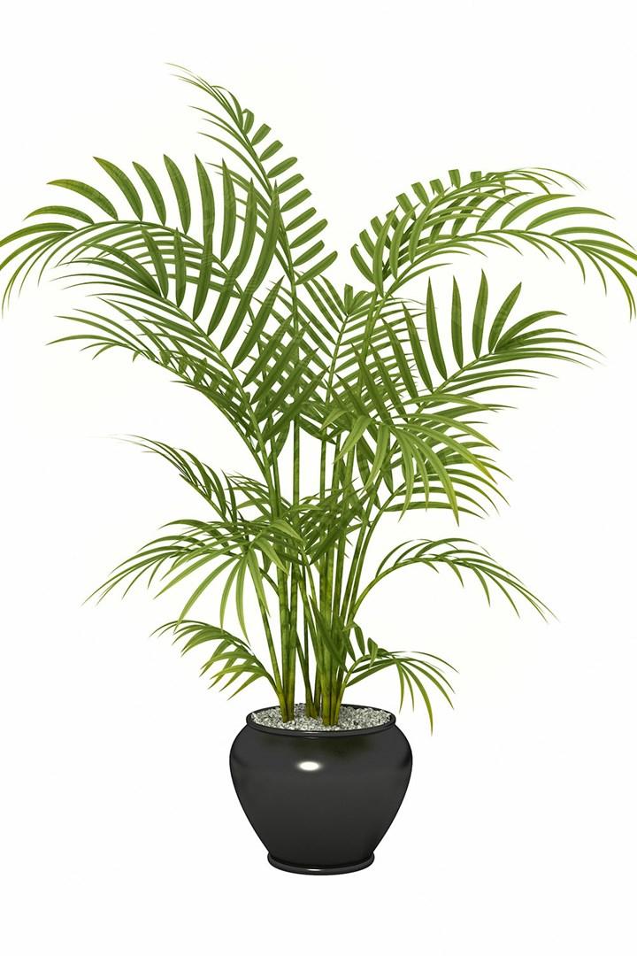 4 loại cây trồng vừa làm đẹp nhà vừa có thể giảm dị ứng từ chất độc có trong không khí - Ảnh 2.