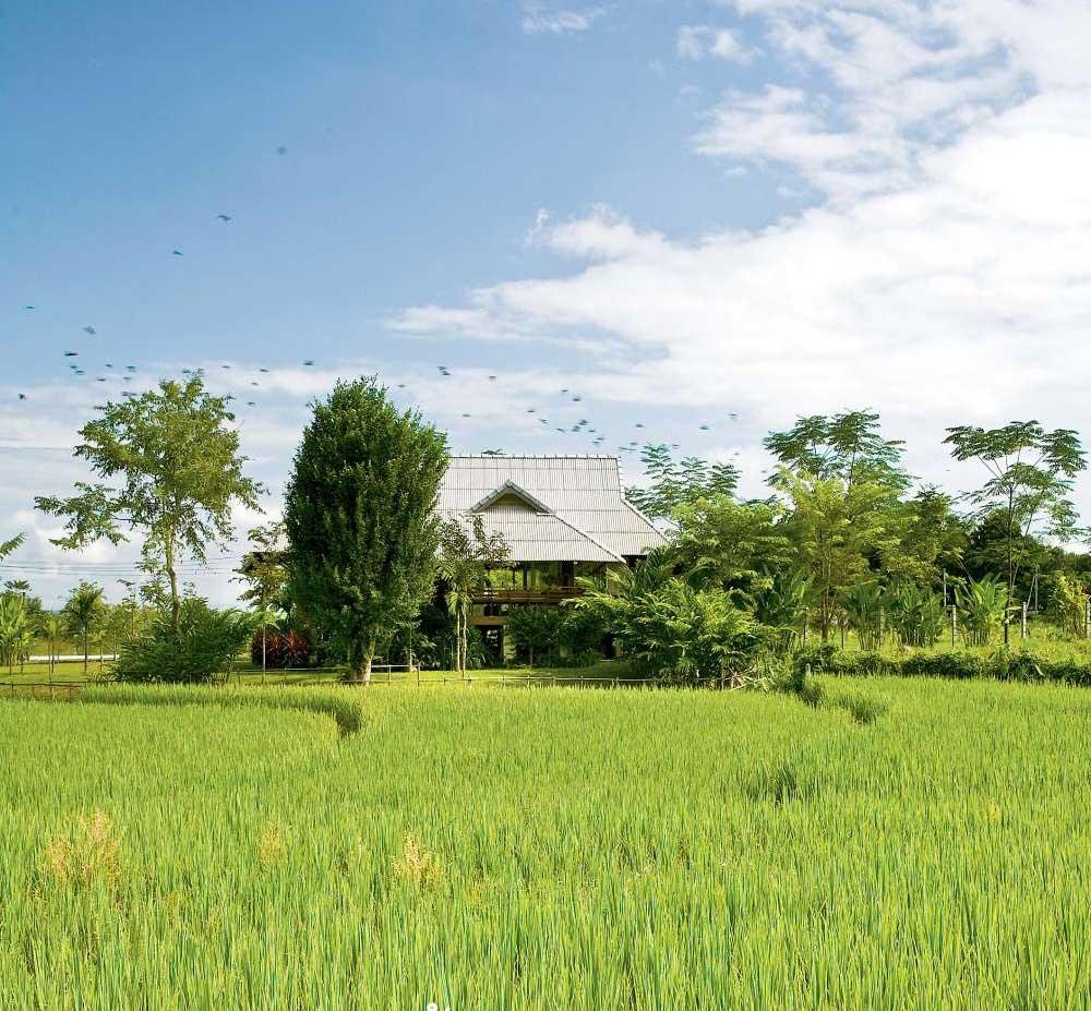 Nhà cấp 4 thiết kế hiện đại tạo cuộc sống tiện nghi giữa cánh đồng lúa xanh tươi ở ngoại ô - Ảnh 1.