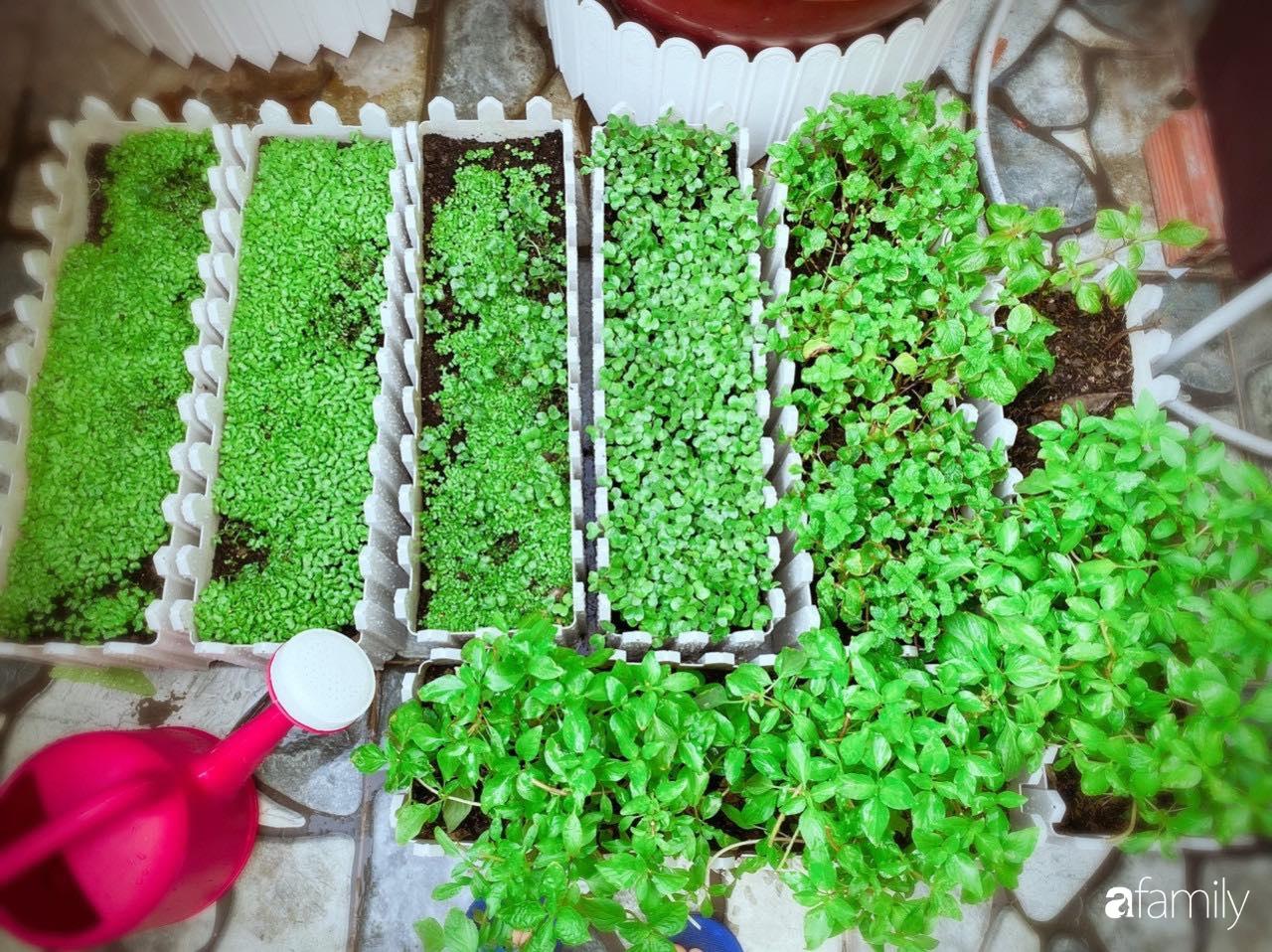 Biệt thự xanh mát bóng cây và hoa hồng rực rỡ của người phụ nữ yêu thiên nhiên ở TP. HCM - Ảnh 9.