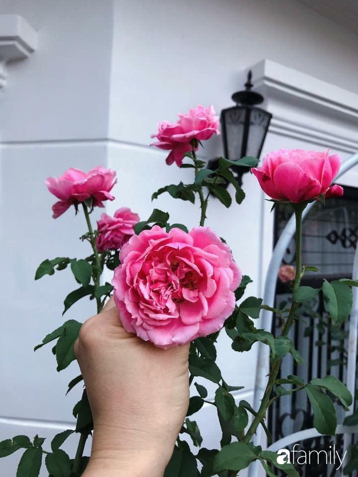 Biệt thự xanh mát bóng cây và hoa hồng rực rỡ của người phụ nữ yêu thiên nhiên ở TP. HCM - Ảnh 5.