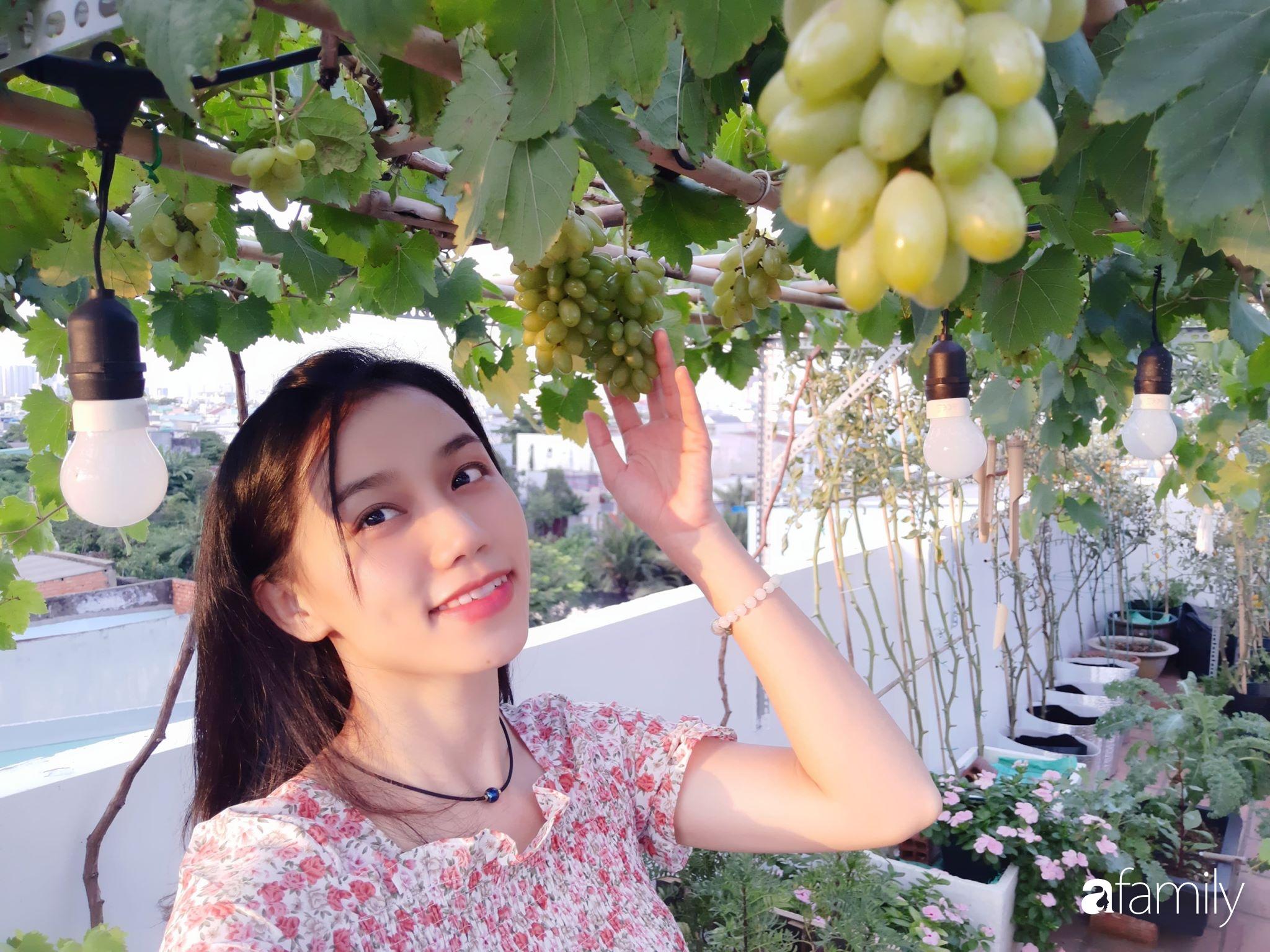 Cô gái trẻ Sài Gòn chia sẻ kinh nghiệm trồng nho trên sân thượng thu hoạch mỏi tay không hết quả - Ảnh 2.