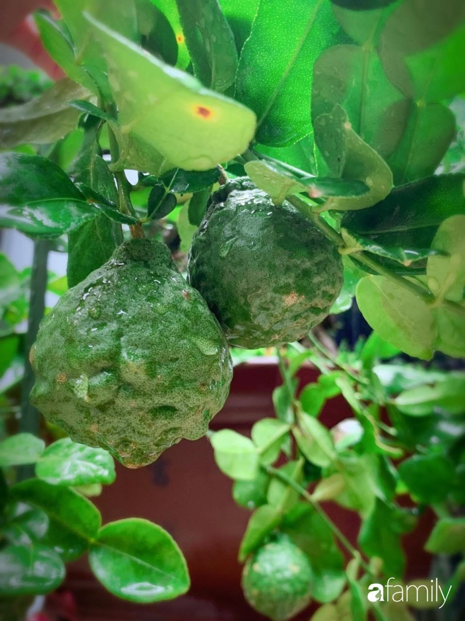 Biệt thự xanh mát bóng cây và hoa hồng rực rỡ của người phụ nữ yêu thiên nhiên ở TP. HCM - Ảnh 12.