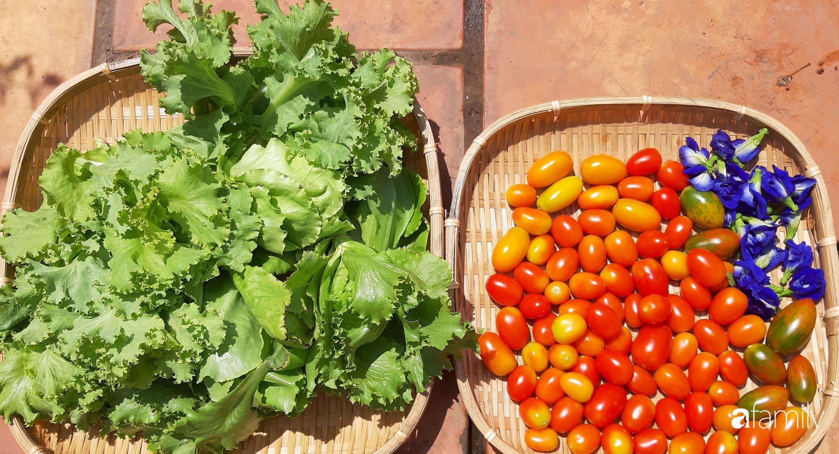 Cô gái trẻ Sài Gòn chia sẻ kinh nghiệm trồng nho trên sân thượng thu hoạch mỏi tay không hết quả - Ảnh 10.