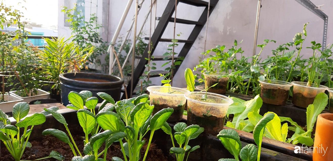 Cô gái trẻ Sài Gòn chia sẻ kinh nghiệm trồng nho trên sân thượng thu hoạch mỏi tay không hết quả - Ảnh 9.