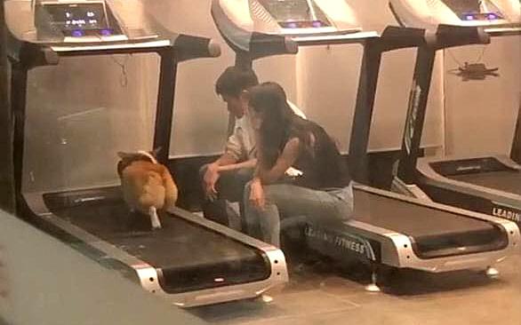 """""""Boss"""" quá béo nên phải mang đến phòng gym tập chạy bộ, nhìn 2 """"con sen"""" lầm lũi ngồi cạnh động viên khiến ai cũng cười lăn lóc"""
