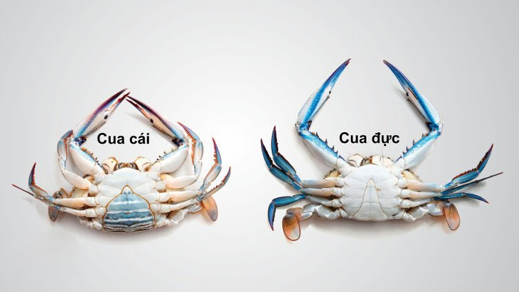 Hải sản là món ăn ưa thích của nhiều người nhưng không phải ai cũng biết cách chọn. Những gợi ý dưới đây sẽ giúp bạn chọn hài sản tươi ngon như dân miền biển chính hiệu. - Ảnh 9.