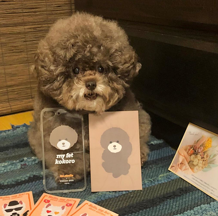 Dân mạng cười rần rần với cô chó Poodle mũm mĩm có dáng ngồi dỗi hờn cả thế giới, ngờ đâu đó lại là đại tiểu thư vạn người mê, tự đóng quảng cáo kiếm tiền cực xịn - Ảnh 14.
