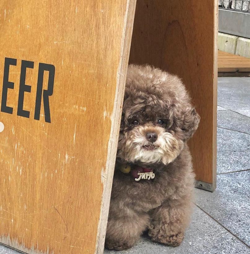 Dân mạng cười rần rần với cô chó Poodle mũm mĩm có dáng ngồi dỗi hờn cả thế giới, ngờ đâu đó lại là đại tiểu thư vạn người mê, tự đóng quảng cáo kiếm tiền cực xịn - Ảnh 12.