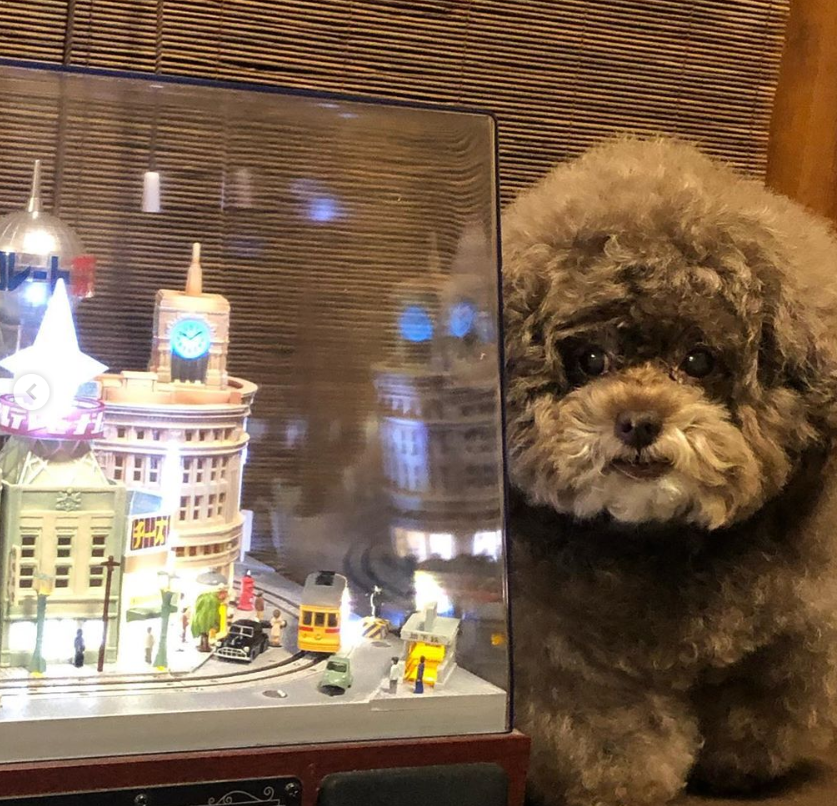 Dân mạng cười rần rần với cô chó Poodle mũm mĩm có dáng ngồi dỗi hờn cả thế giới, ngờ đâu đó lại là đại tiểu thư vạn người mê, tự đóng quảng cáo kiếm tiền cực xịn - Ảnh 13.