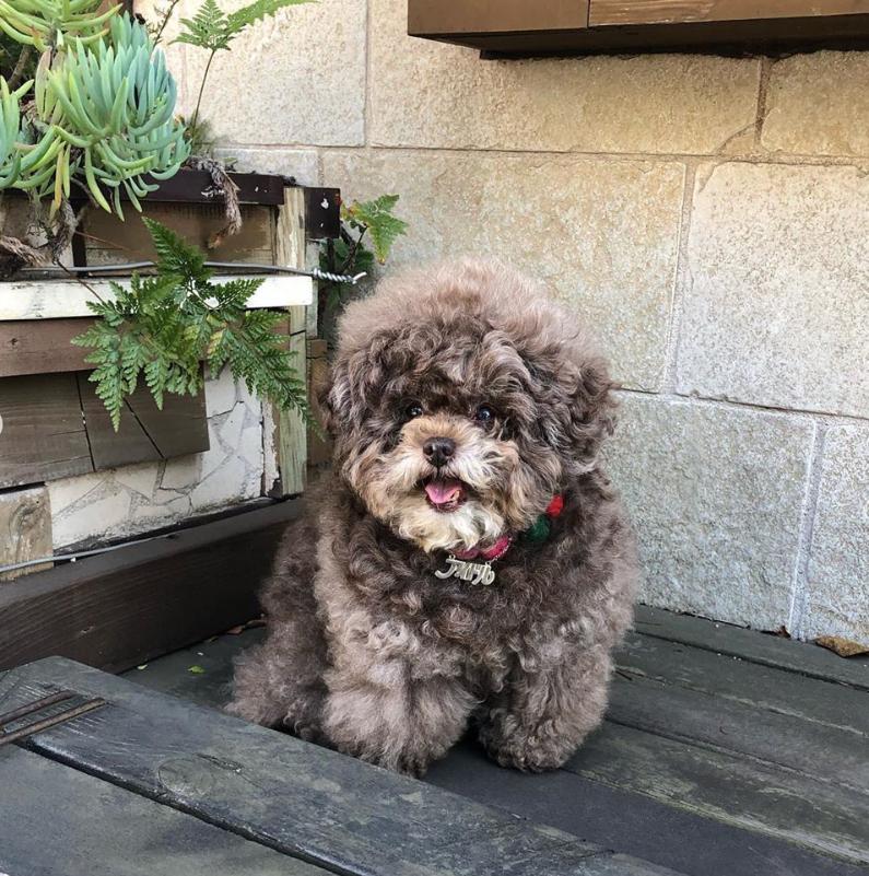 Dân mạng cười rần rần với cô chó Poodle mũm mĩm có dáng ngồi dỗi hờn cả thế giới, ngờ đâu đó lại là đại tiểu thư vạn người mê, tự đóng quảng cáo kiếm tiền cực xịn - Ảnh 8.