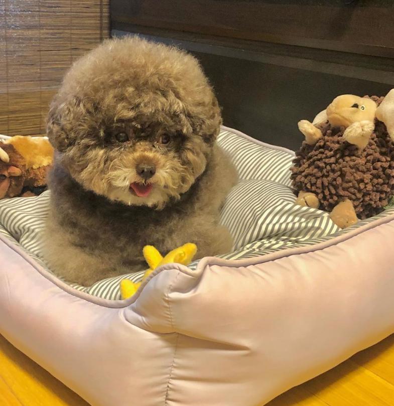 Dân mạng cười rần rần với cô chó Poodle mũm mĩm có dáng ngồi dỗi hờn cả thế giới, ngờ đâu đó lại là đại tiểu thư vạn người mê, tự đóng quảng cáo kiếm tiền cực xịn - Ảnh 20.