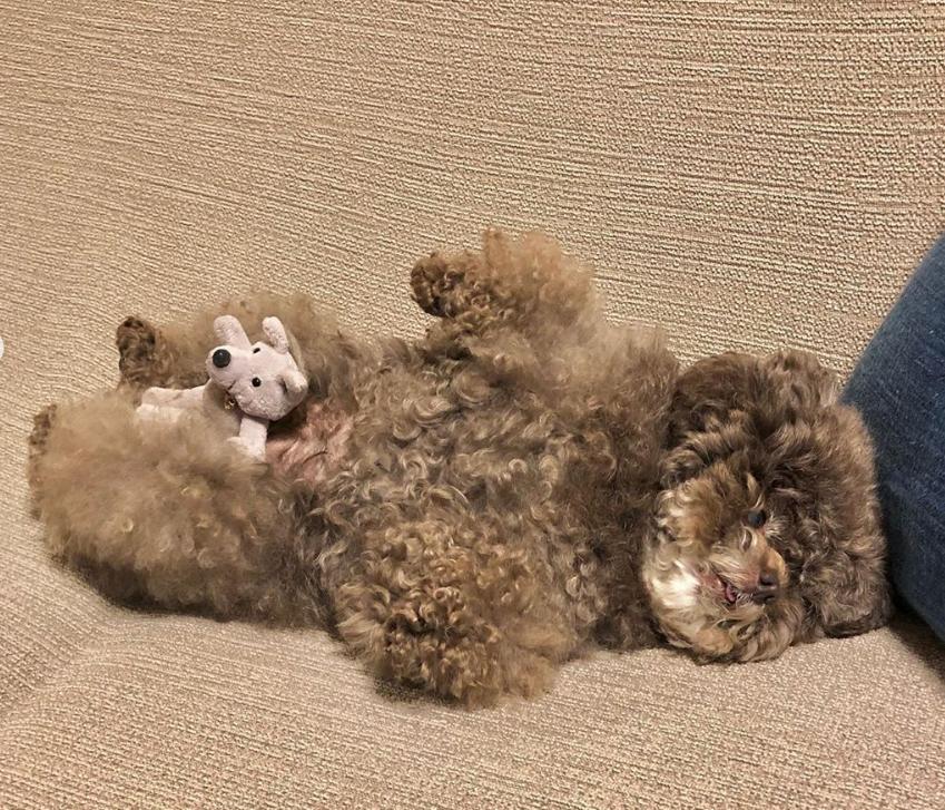 Dân mạng cười rần rần với cô chó Poodle mũm mĩm có dáng ngồi dỗi hờn cả thế giới, ngờ đâu đó lại là đại tiểu thư vạn người mê, tự đóng quảng cáo kiếm tiền cực xịn - Ảnh 19.