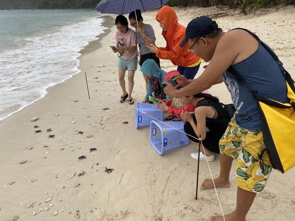 Đây là vùng ngắm rùa biển đẹp nhất ở Việt Nam được báo chí nước ngoài khen ngợi không ngớt, mùa hè này xách vali và đi thôi! - Ảnh 9.