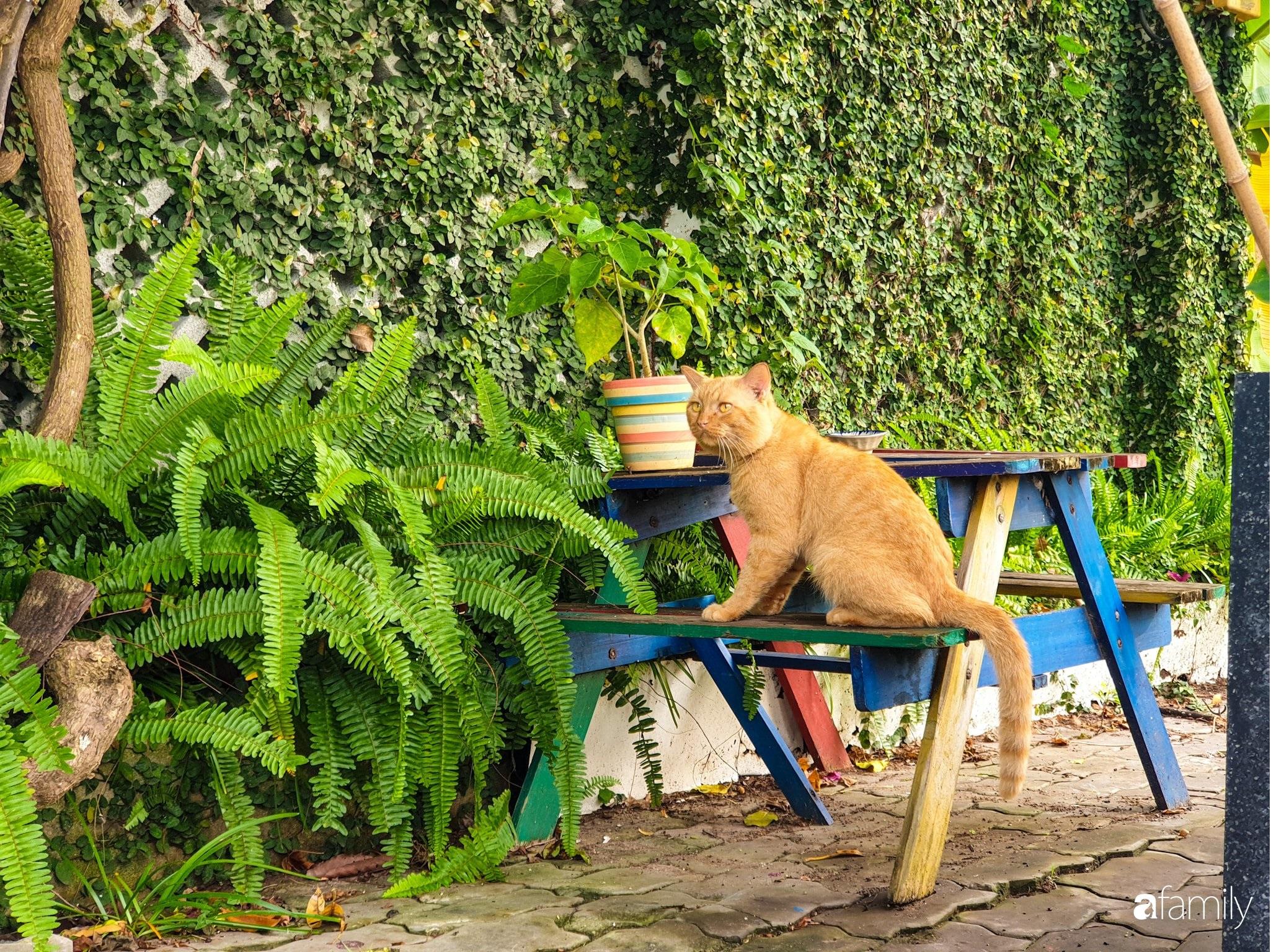 Khu vườn trước nhà xanh mát bóng cây và hoa của anh chàng dành cả thanh xuân để chăm sóc thú cưng - Ảnh 12.