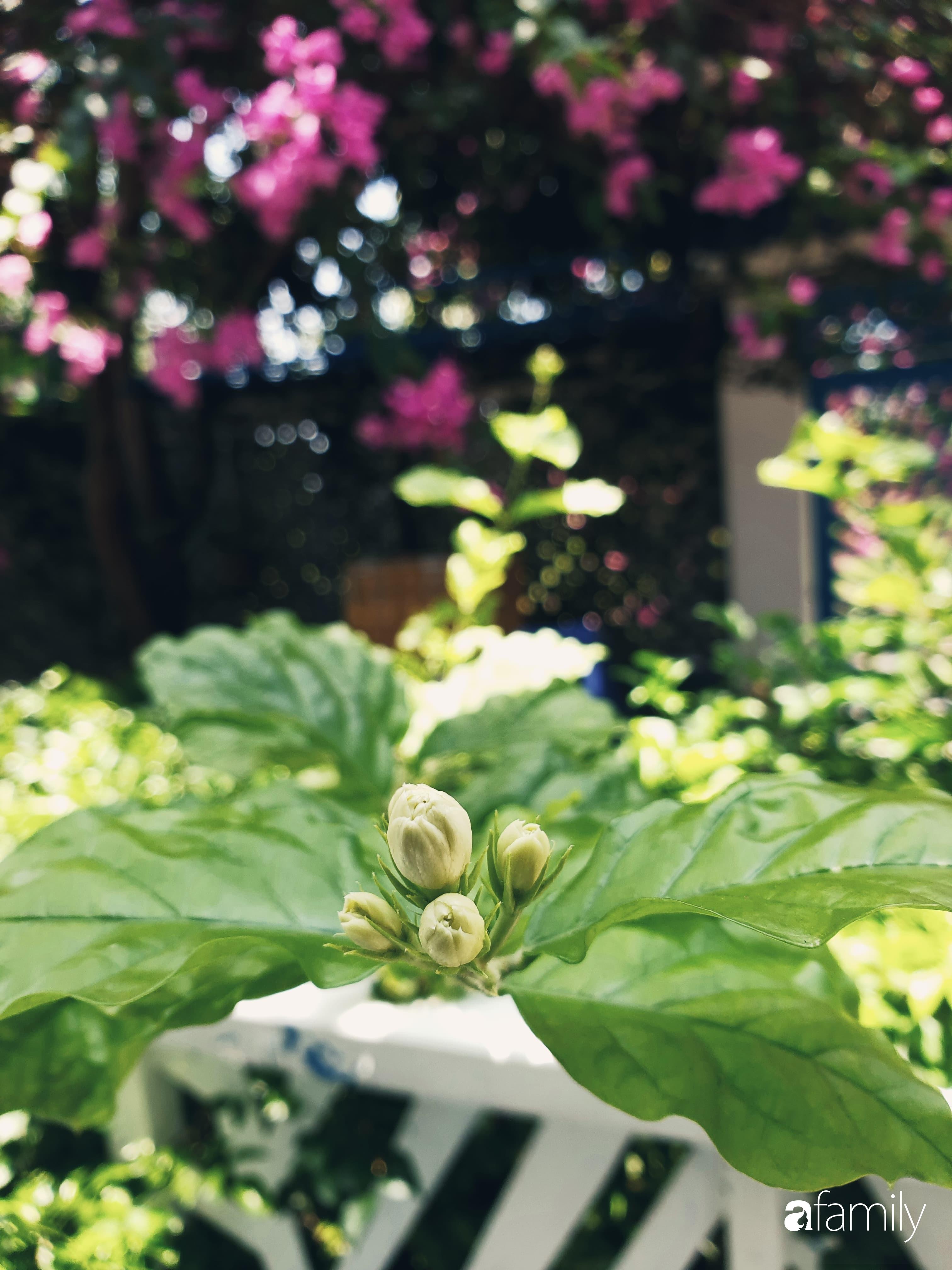 Khu vườn trước nhà xanh mát bóng cây và hoa của anh chàng dành cả thanh xuân để chăm sóc thú cưng - Ảnh 8.