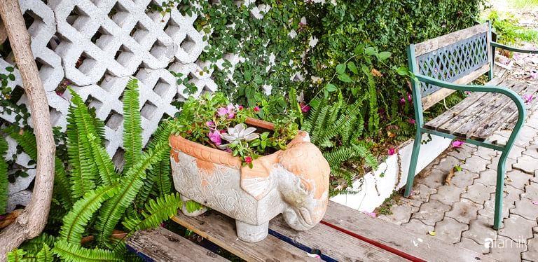 Khu vườn trước nhà xanh mát bóng cây và hoa của anh chàng dành cả thanh xuân để chăm sóc thú cưng - Ảnh 14.
