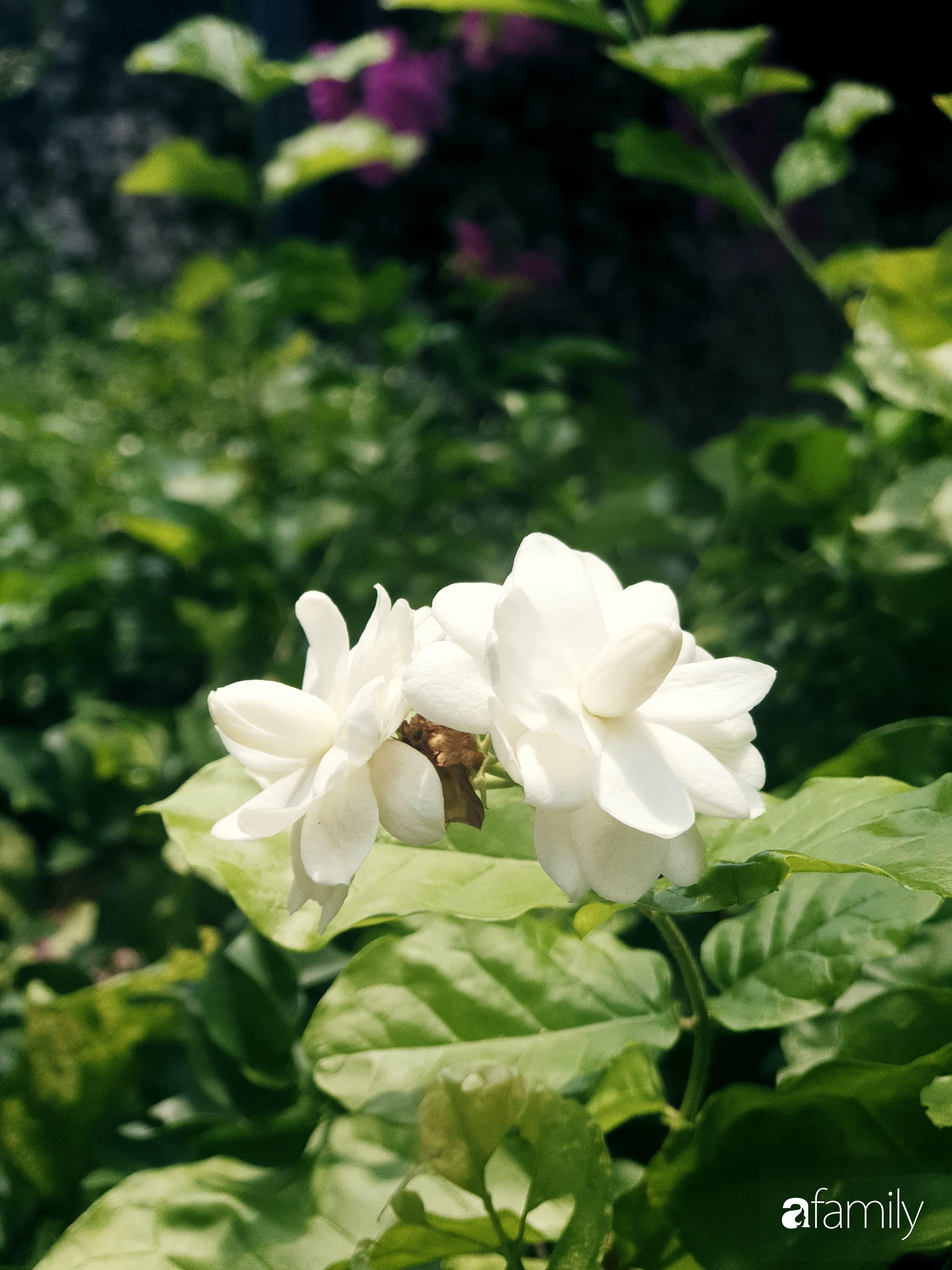 Khu vườn trước nhà xanh mát bóng cây và hoa của anh chàng dành cả thanh xuân để chăm sóc thú cưng - Ảnh 6.