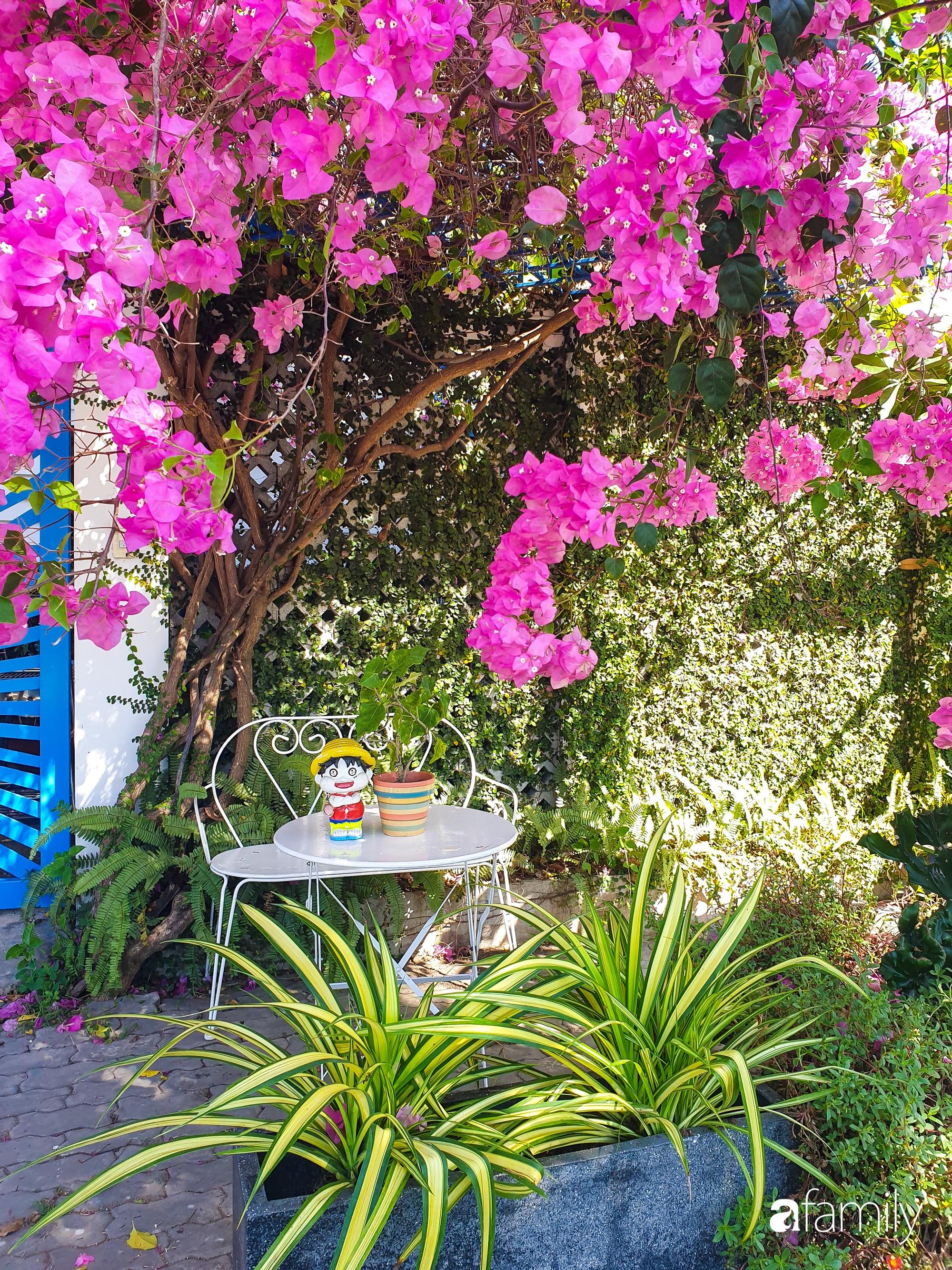 Khu vườn trước nhà xanh mát bóng cây và hoa của anh chàng dành cả thanh xuân để chăm sóc thú cưng - Ảnh 3.